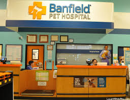 small business marketing in the veterinary industry
